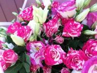 Розовая Роса